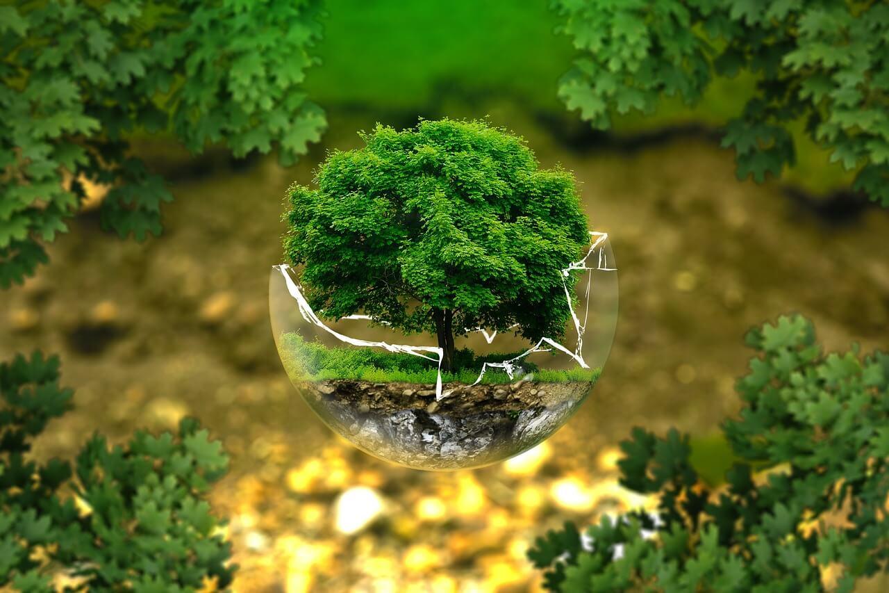 Шляхи екологічного життя