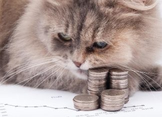 Kot jako środek trwały, czyli pięć nietypowych kosztów firmowych_min