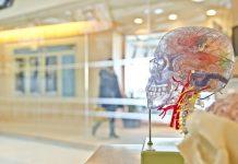 mózg czaszka
