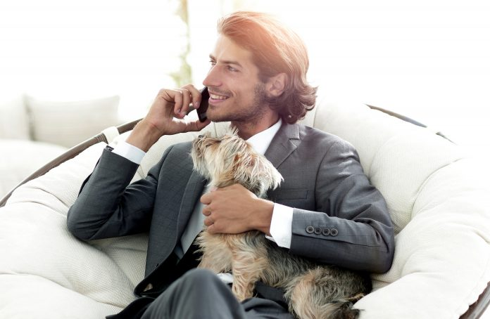 businessman holds his pet and talks on the smartphone while sitting in a comfortable chair