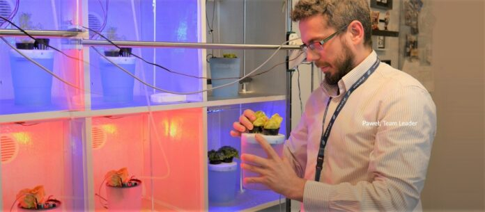 Inżynierowie z Sii Polska wyhodowali rośliny bez gleby wykorzystując sztuczną inteligencję