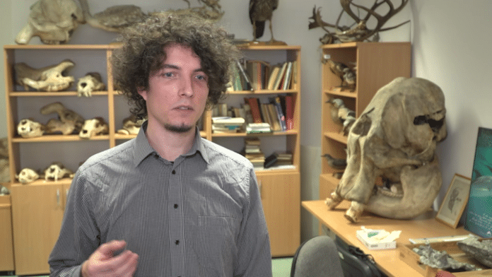 Polacy odkryli prawdziwe pochodzenie dinozaurów. Dwunożność nabyły w toku ewolucji, zupełnie jak ludzie