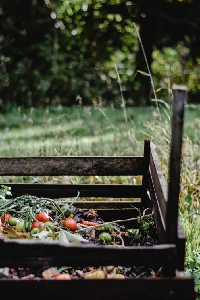 Kompostownik – wszystko, co powinieneś o nim wiedzieć