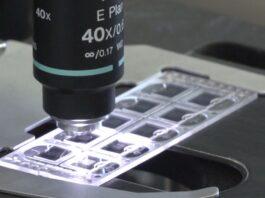 Naukowcy stworzyli syntetyczne związki imitujące działanie ludzkich peptydów. Mogą być skuteczne w walce z koronawirusem czy opryszczką [DEPESZA]