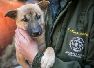 Humane Society International